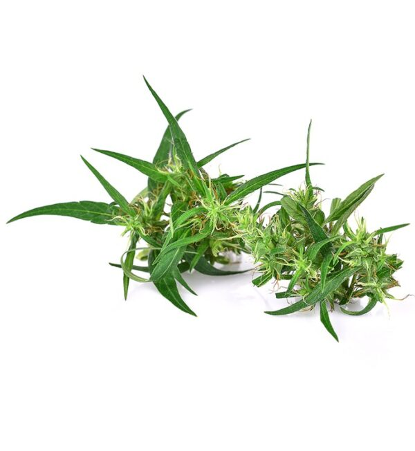 what-is-cbd-hp3